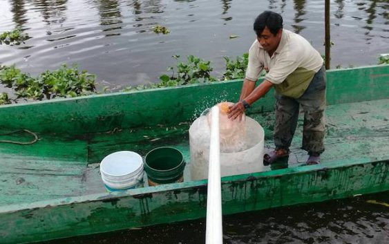ayuda a xochimilco por el sismo