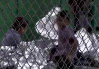 EPN se muestra débil ante situación de niños migrantes